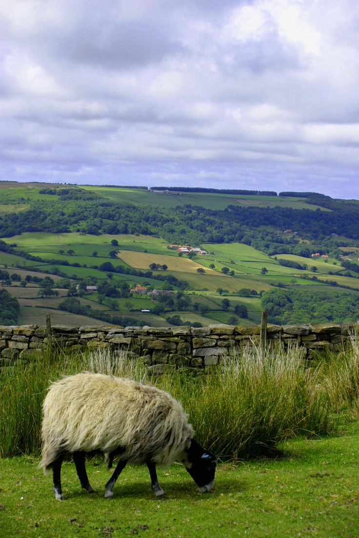 Sheep in the Dales. The Yorkshire Dales (also known simply as The Dales) is an…