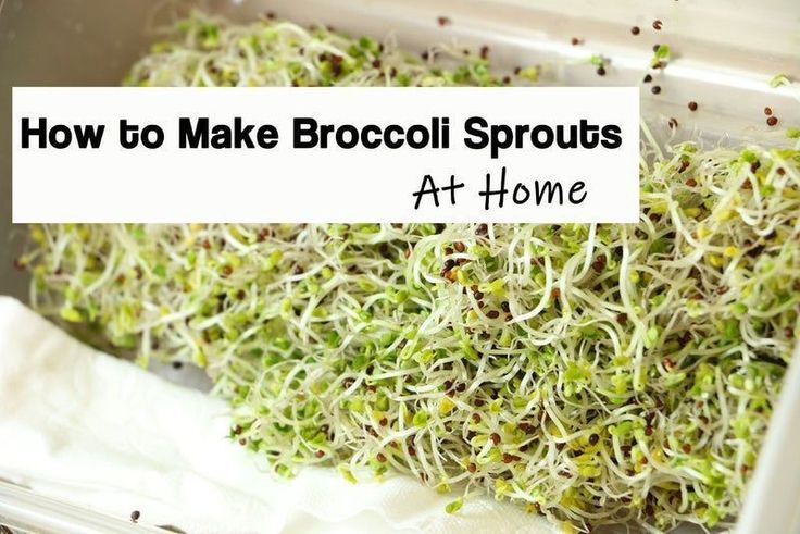 How to Grow Broccoli Sprouts in a Jar 6 Steps (with