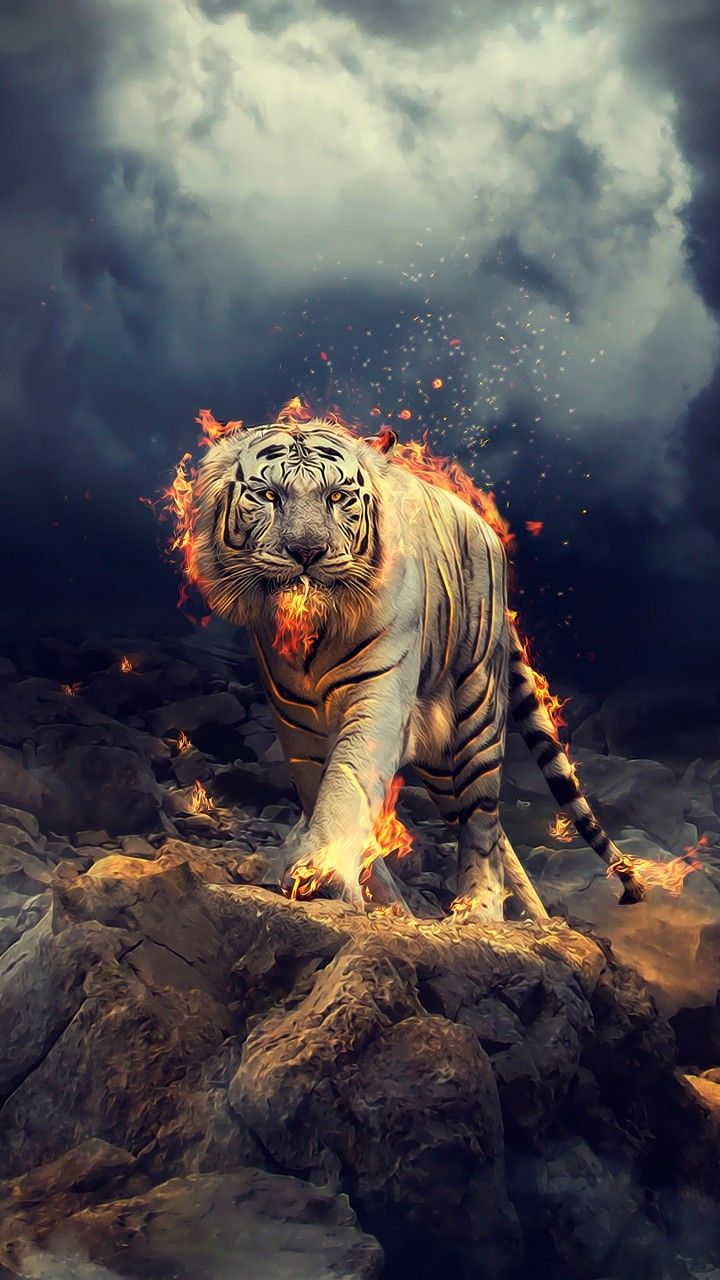 Black And White Tiger Wallpaper Home Screen In 2020 Tiger Wallpaper Animal Wallpaper Wild Animal Wallpaper