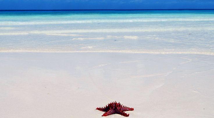 Zanzibar Photo Gallery | KLM Safaris