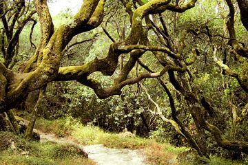 фотография леса в Бусаку