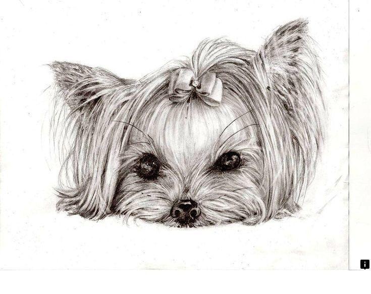 Картинки йорка щенка для срисовки, дня любимая