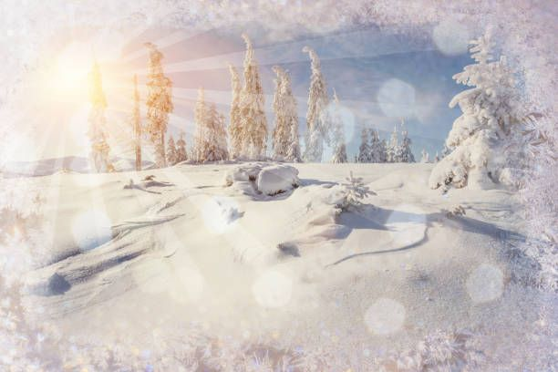 winter landscape trees snowbound bokeh background with snowflak