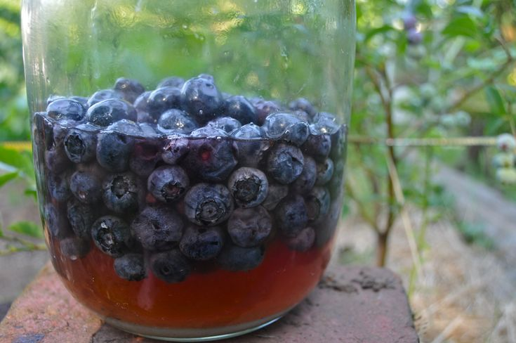 Blueberries Preserved in Honey (lacto-fermented)