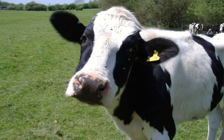 5 Farm Animals That Are Probably Smarter Than Your Dog