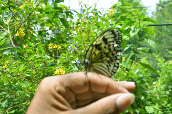 A comely butterfly docking on my finger while inside the Davao Butterfly House inside the Davao Crocodile Park Complex, Davao City.