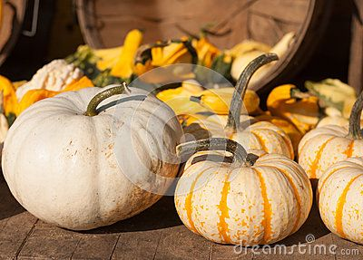 White and striped pumpkins at the pumpkin stand.