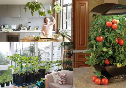 Small indoor vegetable garden indoor vegetable gardening pinterest indoor vegetable - Growing vegetables indoors practical tips ...