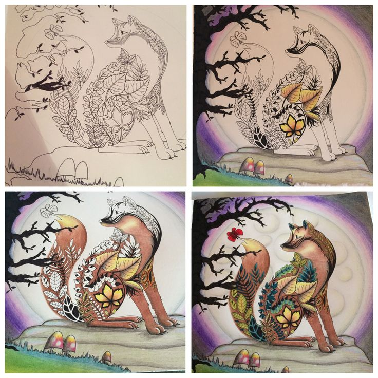 4 Stages Of Colouring Mister Fox Enchantedforest Joanna