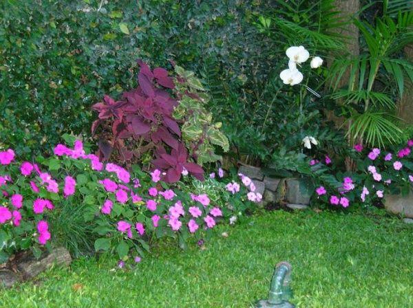 Las 25 mejores ideas sobre sombra de patio trasero en - Plantas de sombra para jardin ...