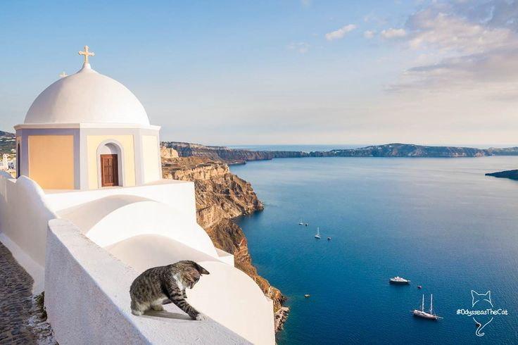 #OdysseasTheCat spotted in #Santorini! What should he do there? Can you suggest? #summertime #sunset