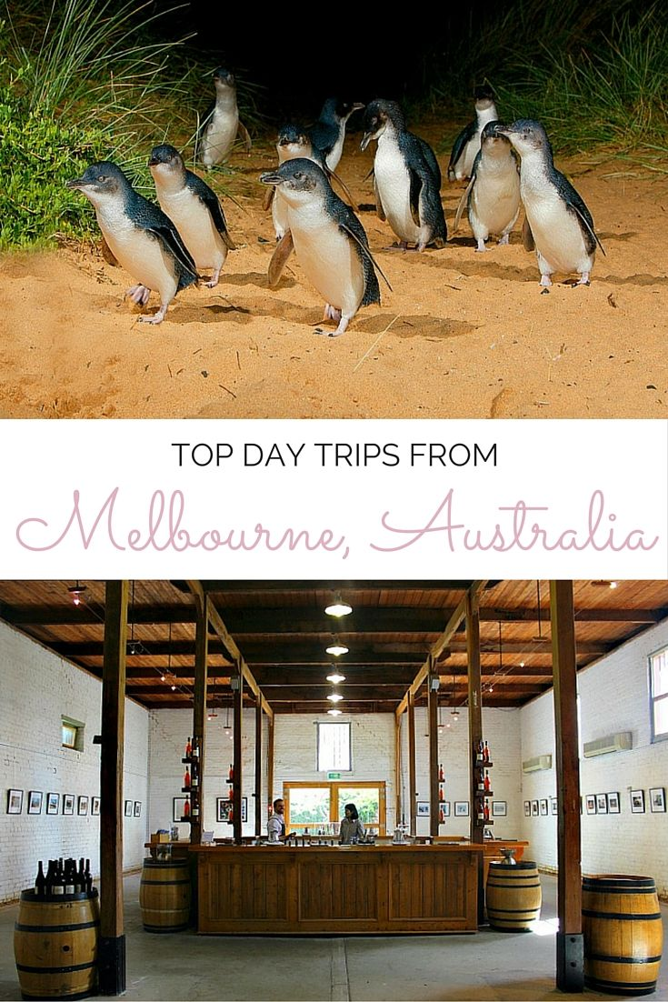 Heading to Melbourne, Australia? Here are some fantastic day trips, including Phillip Island, wine tasting in the Yarra Valley and driving the Great Ocean Road.