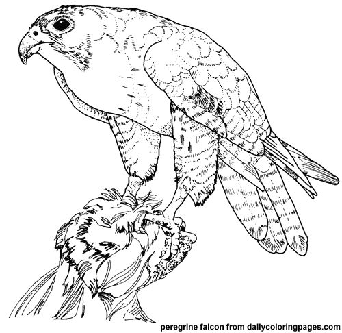Texas Bird Coloring Pages
