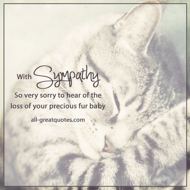 with sympathy card on the loss of your CAT PET bereavement card