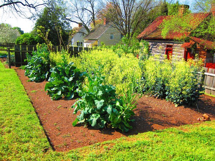 220 best north carolina piedmont foothills winston salem n c old salem bethabara my for North carolina vegetable gardening