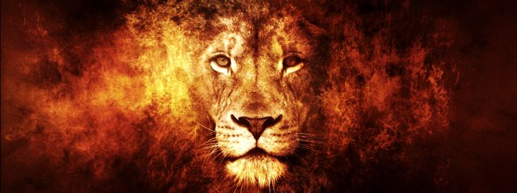 LEON DE JUDA: King Of Beast, Animal Stuff, Panthera Leo, Artworks