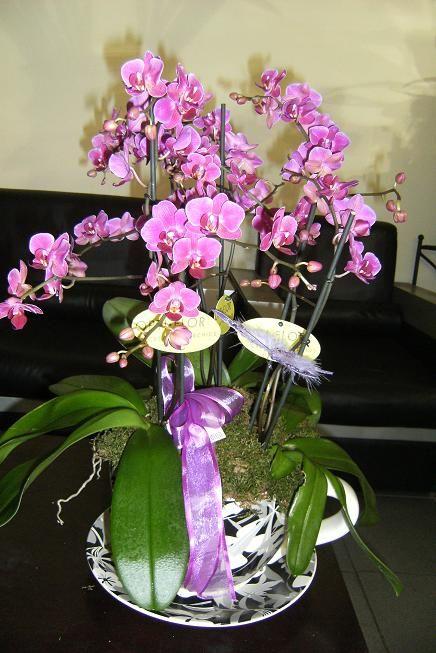 Kocaeli çiçek servisi Kocaeli orkideler www.goksallarcicekcilik.com