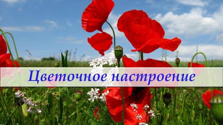 Красивая музыка и цветы. Цветочное настроение