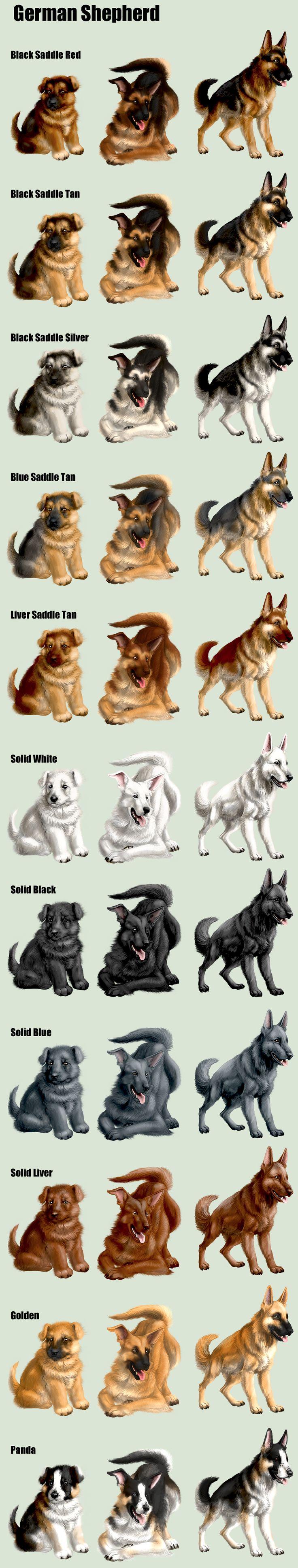 squiby_spoiler_dog_germanshepherd_by_elen89-d75xb1z.png (900×4735)