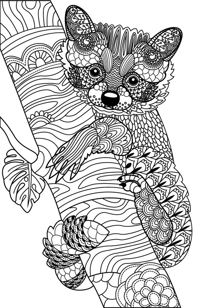 809 best Animal Coloring Pages for Adults images on ... | coloring pages animals for adults