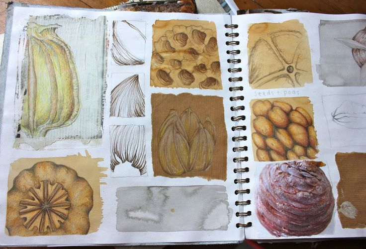 excellent exploration of a theme with a range of media! natural forms sketchbook, Julia Wright