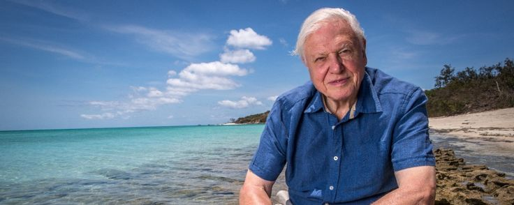 #Attenborough e la grande barriera corallina @focus_it @sugarpulp