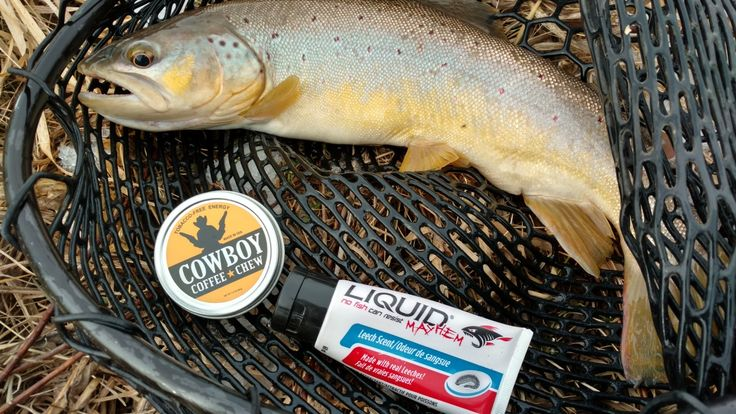 """You Just gotta love the Smell of Coffee Trout & @liquidmayhem 🔫🤠 This 20"""" Brown Couldn't Resist a Spinner & a dab of Leech Scent. #mayhemmilitia #fishing #fish #trout #coffee #liquid #mayhem #catchandrelease 🎣"""