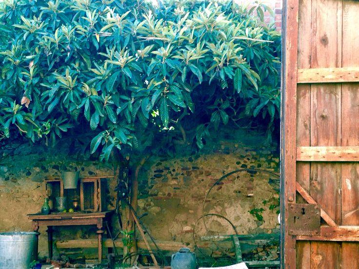 Jardín níspero