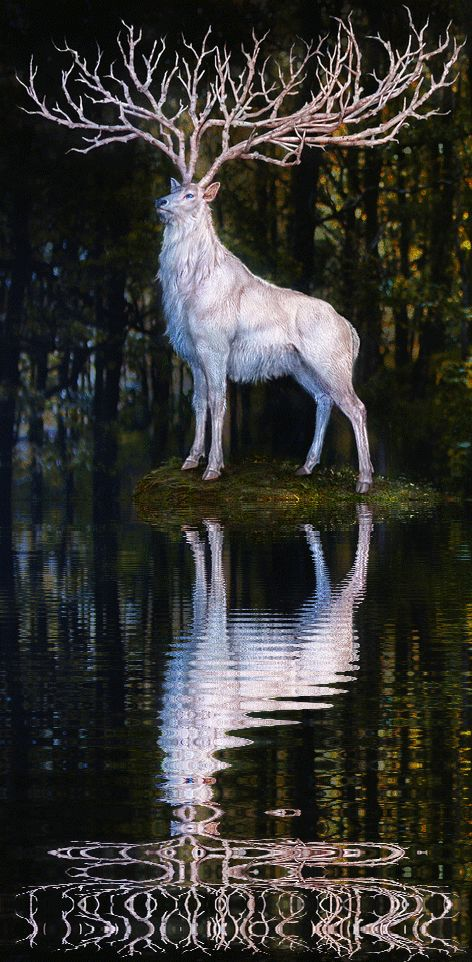 The White Stag