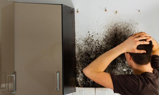 Auch Ihre Küche ist nicht vor Schimmelbefall sicher.