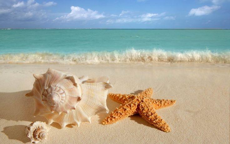 sea shells   Big Sea Shells On The Beach wallpapers