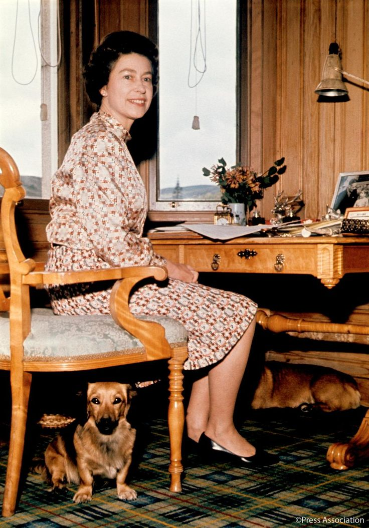 British Monarchy on Twitter:   Queen Elizabeth with her dogs in her study at Balmoral Castle, 1972