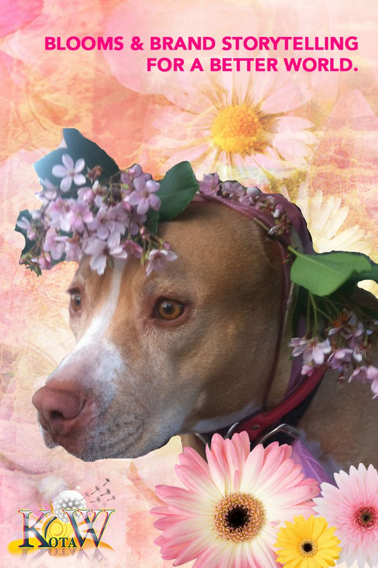 Flowers for Pit Bulls & Social Good: Does Your Brand Story Make the World a Better Place? | Pit Bulls and Personal Branding