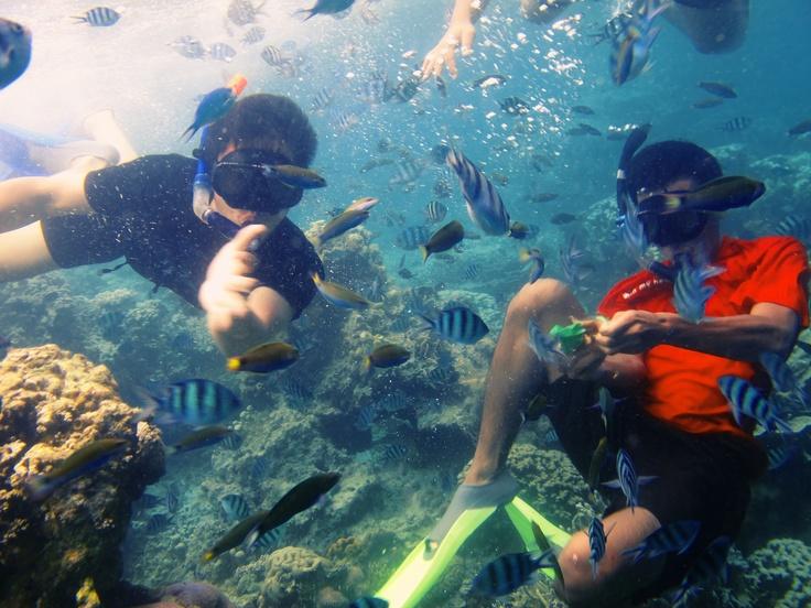 Snorkling at Karimun Jawa, Indonesia