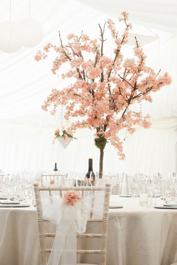 Blossom Trees And Wisteria Trees For Hire Chillie Breeze Cherry Blossom Trees For Hire Ch Blossom Tree Wedding Cherry Blossom Theme Cherry Blossom Wedding