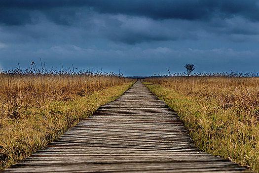 Biebrza National Park by Katarzyna Szymanska