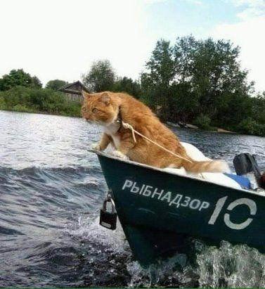 Одноклассники | Смешные фото кошек, Котопес, Самые милые ...