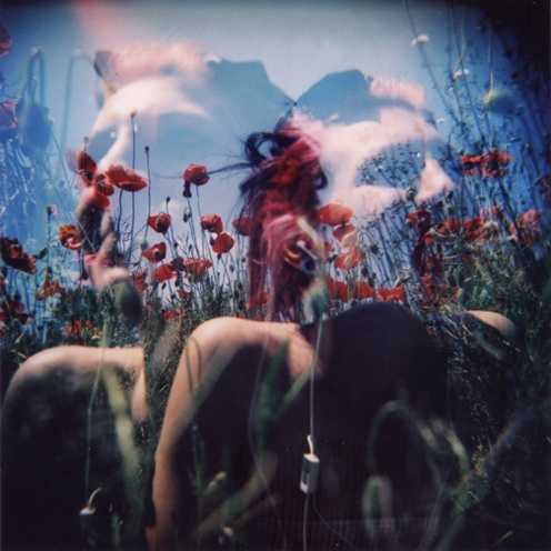 poppies and holga
