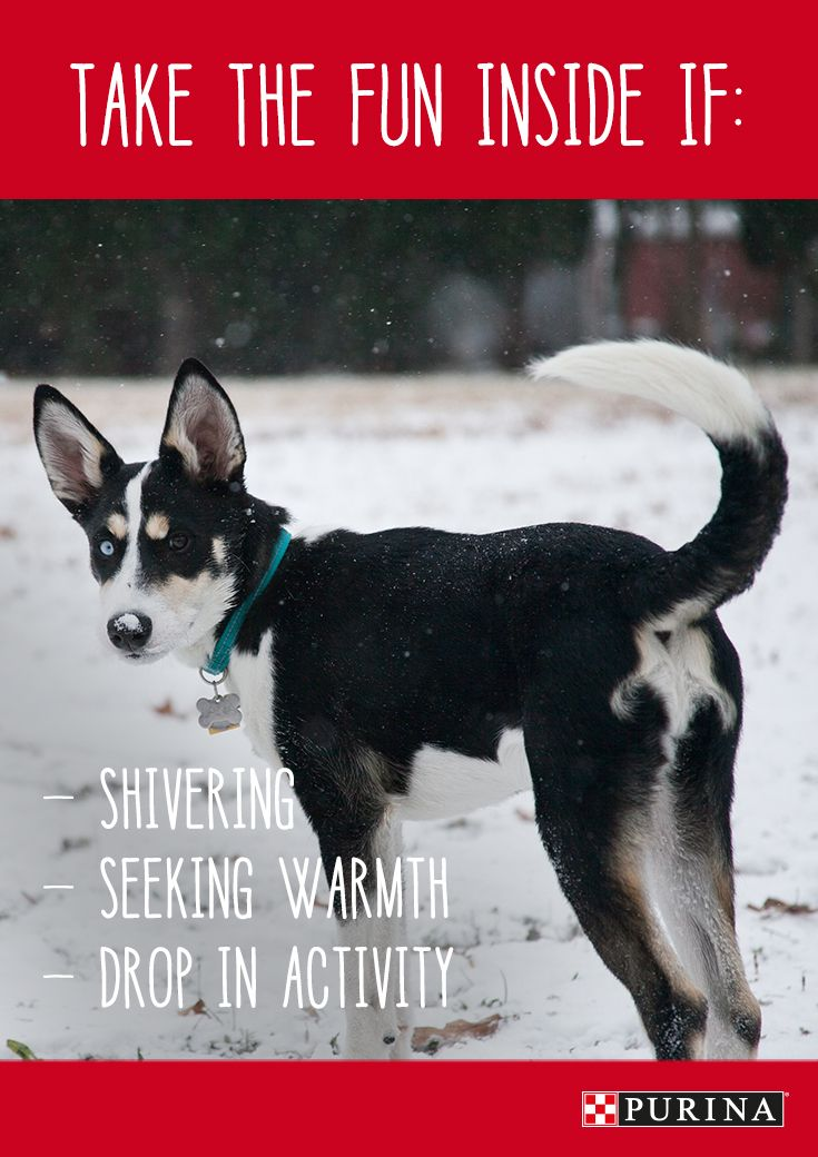 When your dog starts showing changes in their behavior during Winter playtime it is time to take the fun inside. Read more about keeping your dog safe in the Winter here.