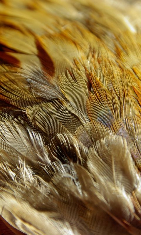 480x800 Wallpaper feathers, texture, close-up