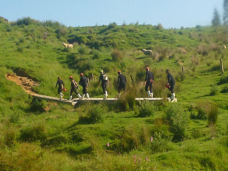 Haggas Honking Holes www.waitomo.co.nz