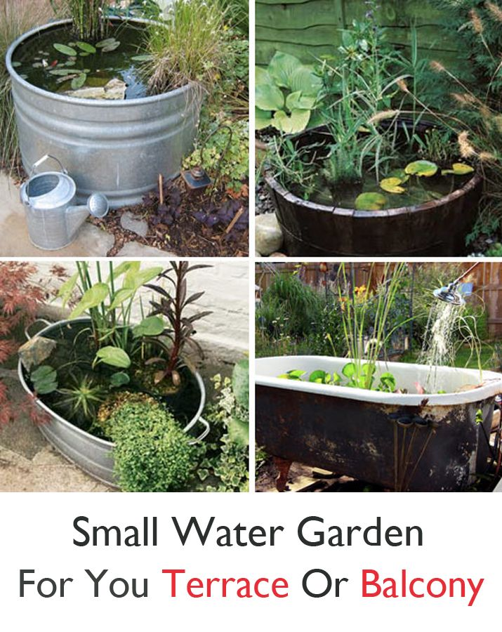 Small water garden for you terrace or balcony
