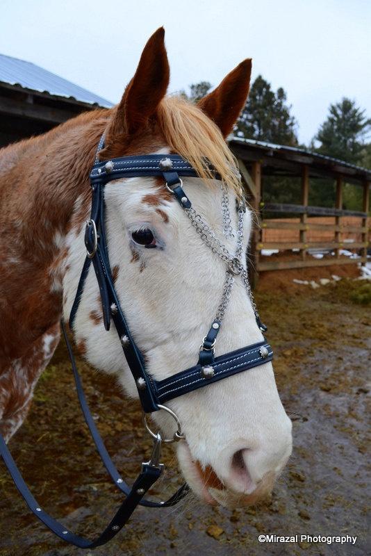 1272 Best Horse Stuff Images On Pinterest Horse Stalls