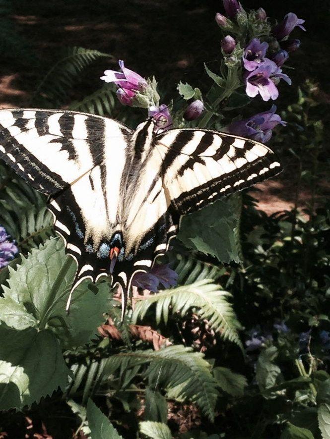 go native  the best pacific northwest plants that help pollinators