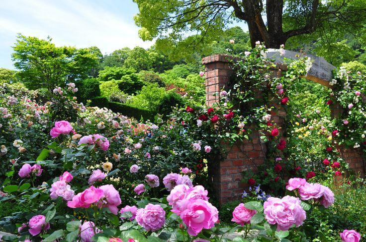 立体的に咲き誇るバラ