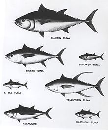 Different type of tuna.