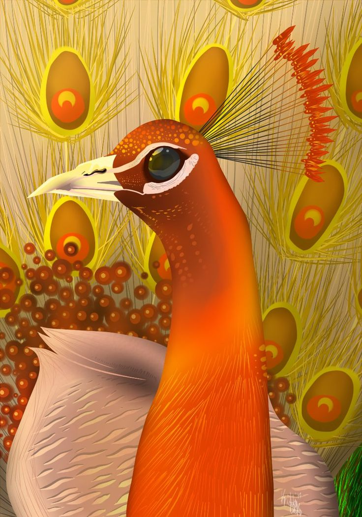 Fire Peacock Google Search