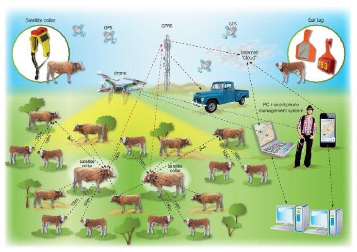 #Telefónica y #Cattle-Watch conectan la #industria #ganadera a #IoT