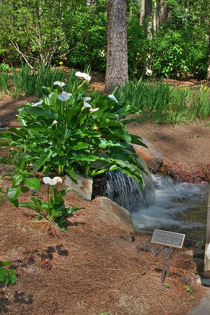 19 best Birmingham Botanical Gardens images on Pinterest ...