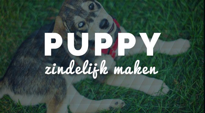 Professionele hondenfokkers beginnen met zindelijkheidstraining vanaf het moment, dat de puppies drie weken oud zijn en dit zou voor u een meevaller zijn natuurlijk. Maar ook als de hondenfokker gewerkt heeft aan de zindelijkheid van…